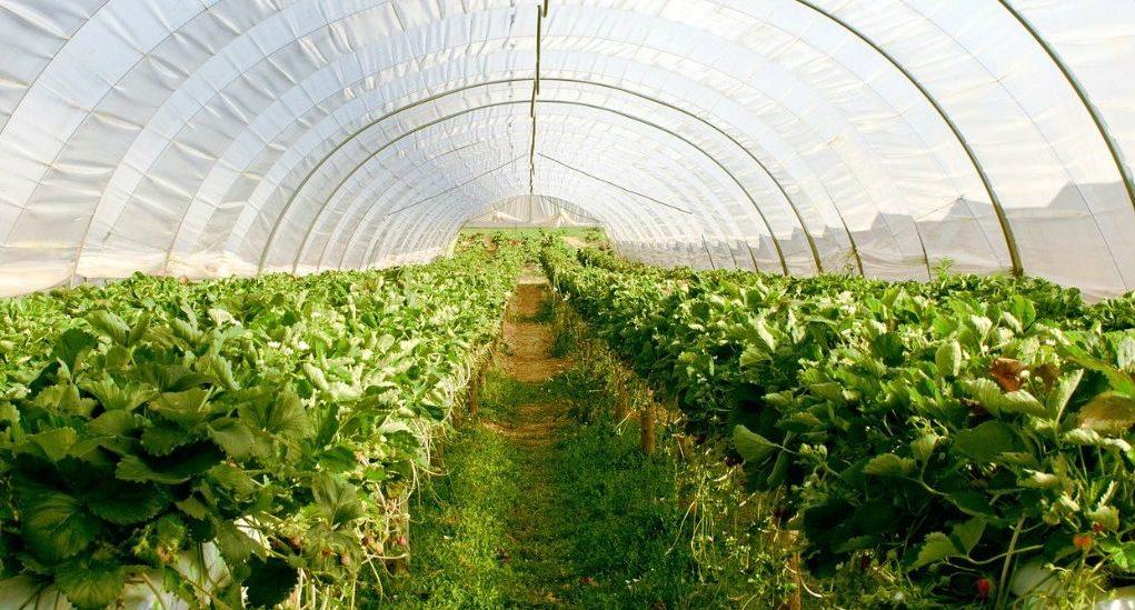 Korea Selatan membangun kota pertanian senilai $ 10 miliar di Mesir & Korea Selatan membangun kota pertanian senilai $ 10 miliar di Mesir ...