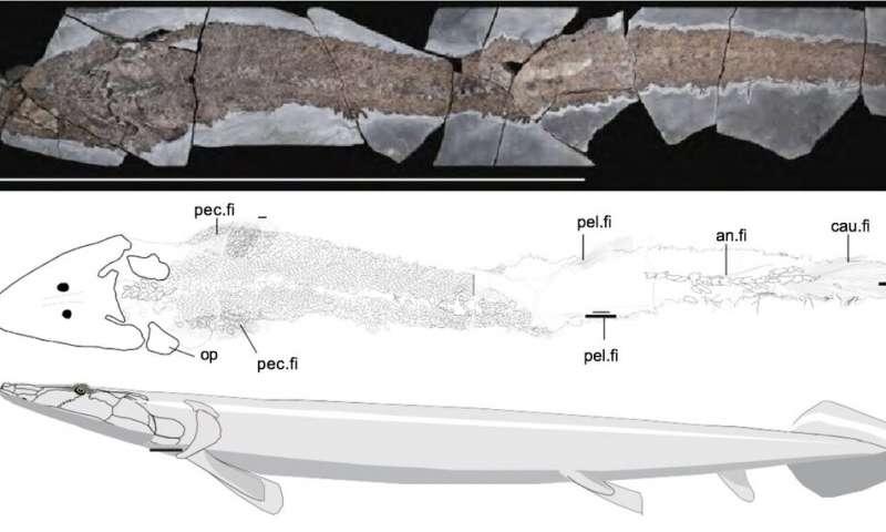 Fosil ikan purba Elpistostege