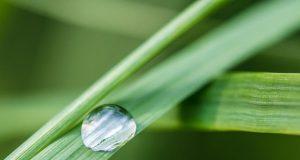 Air di atas daun